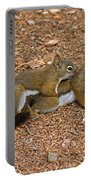 Pine Squirrel Portable Battery Charger
