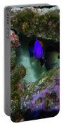 Tropical Fish In Cave Portable Battery Charger