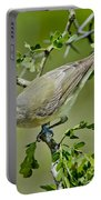 Warbling Vireo Portable Battery Charger