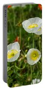 White Iceland Poppy - Beautiful Spring Poppy Flowers In Bloom. Portable Battery Charger