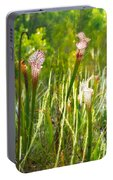 White-topped Pitcher Plant Portable Battery Charger