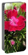 Sweet William From The Super Duplex Bluepoint Mix Portable Battery Charger