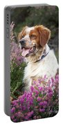 Brittany Spaniel Or Epagneul Breton Portable Battery Charger