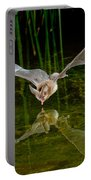 California Leaf-nosed Bat At Pond Portable Battery Charger