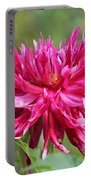 Dahlia Named Normandy Wild Willie Portable Battery Charger