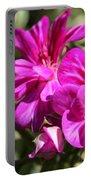 Ivy Geranium Named Contessa Purple Bicolor Portable Battery Charger