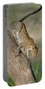 Leopard Panthera Pardus On Tree, Ndutu Portable Battery Charger