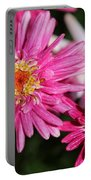 Marguerite Daisy Named Summer Song Rose Portable Battery Charger