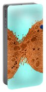 Mitosis, Late Telophase, Tem Portable Battery Charger