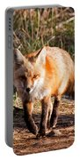 Red Fox In Prospect Park Portable Battery Charger