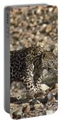 Arabian Leopard Panthera Pardus Portable Battery Charger