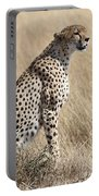 Cheetah Searching For Prey Portable Battery Charger