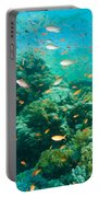 Coral Reef Portable Battery Charger