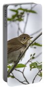 Graycheeked Thrush Portable Battery Charger