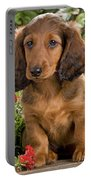 Long-haired Dachshund Portable Battery Charger