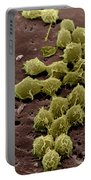 Macrophages On The Surface Portable Battery Charger