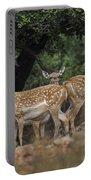 Mesopotamian Fallow Deer  Portable Battery Charger