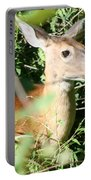 White Tailed Deer Portrait Portable Battery Charger