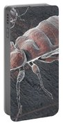 Bed Bugs Cimex Lectularius Portable Battery Charger