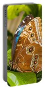 Blue Morpho Butterfly Portable Battery Charger