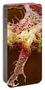 Macrophage Ingesting Pseudomonas Portable Battery Charger