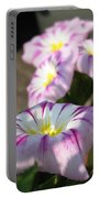 Morning Glory Named Pink Ensign Portable Battery Charger