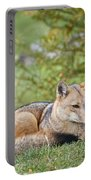 Patagonian Red Fox Portable Battery Charger