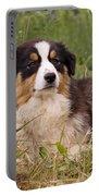 Australian Shepherd Dog Portable Battery Charger