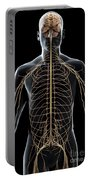 The Nerves Of The Upper Body Portable Battery Charger