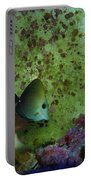 Tropical Fish And Coral Portable Battery Charger