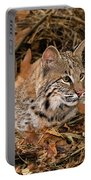 611000006 Bobcat Felis Rufus Wildlife Rescue Portable Battery Charger