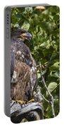 Juvenile Bald Eagle Portable Battery Charger