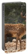 Mesopotamian Fallow Deer  Portable Battery Charger
