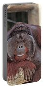 Portrait Of A Large Male Orangutan Portable Battery Charger