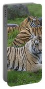 Siberian Tigers, China Portable Battery Charger
