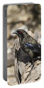 Bronzed Cowbird Portable Battery Charger