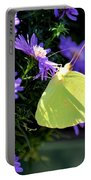 A Clouded Sulphur On Lavender Mums Portable Battery Charger