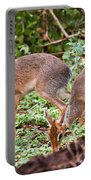 A Couple Of Dik-dik Antelopes In Tanzania. Africa Portable Battery Charger