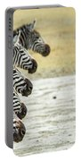 A Grevys Zebra In Ngorongoro Crater Portable Battery Charger