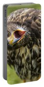 A Juvenille Peregrine Falcon Portable Battery Charger