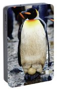 A King Penguin Holds Its Egg Portable Battery Charger