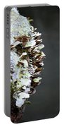 A Lichen Abstract 2013 Portable Battery Charger