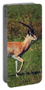 A Male Impala In Ngorongoro Crater. Tanzania Portable Battery Charger