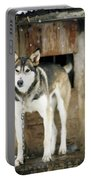 A Sled Dog Stands By Its Kennel Portable Battery Charger