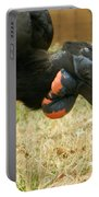 Abyssinian Ground Hornbill Portable Battery Charger