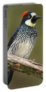 Acorn Woodpecker Melanerpes Portable Battery Charger