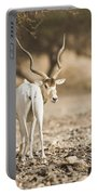 Addax Addax Nasomaculatus Portable Battery Charger