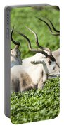 Addax Nasomaculatus Portable Battery Charger