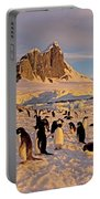Adelie Penguin, Pygoscelis Adeliae Portable Battery Charger