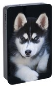 Adorable Siberian Husky Sled Dog Puppy Portable Battery Charger